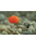 Eternal Boilies Fluoro Orange 15Mm